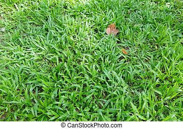Green Grass in Garden Texture Background