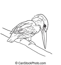 Drawing of common kingfisher bird hold on twig,vector...