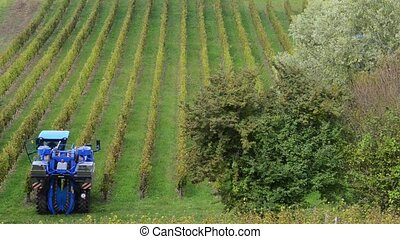 Grape Harvest Machine, Bordeaux Vineyard, France