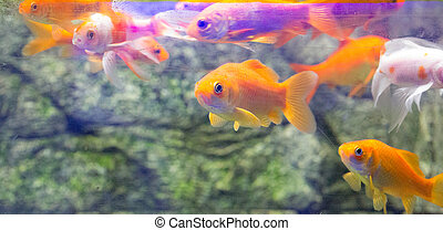 Beautiful colorful fish in the aquarium photo for you