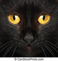 眼睛, 動物, 宏, 貓, 黑色, 背景