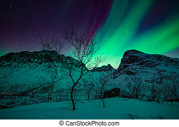 Northern lights in scandinavia