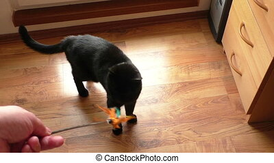 Black cat playing with a toy