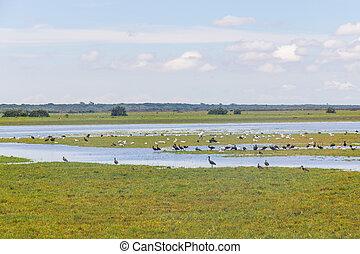 Group of wild birds in Lagoa do Peixe