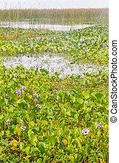 Lagoa dos Patos lake and vegetation - Lagoa dos Patos lake...