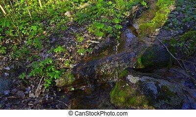 Spring Creek at forest, tilt
