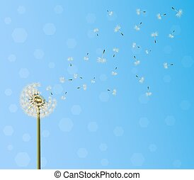 dandelion seed escape - A lot of seeds escape from a...