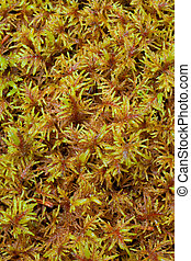 Peat Moss (Sphagnum) background pattern texture.