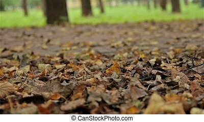 Autumn leafs, buggy. Close up, horizontal slider shot -...