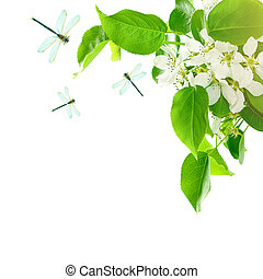 Healthy Spring Background with Green Leaves, Spring Flowers and Dragonfly Isolated on White Background