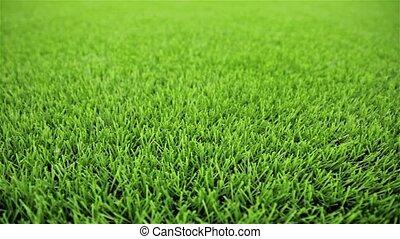 Grass field. Close-up, horizontal slider shot - Grass field...