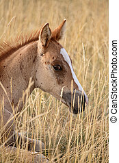 Foal resting in a Saskatchewan pasture