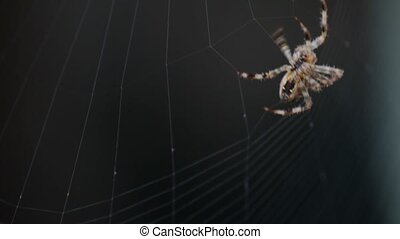 Spider Spinning Web - Close up follow focus of a spider...