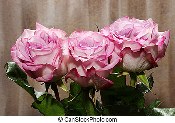 A bunch of Roses - A bunch of pink Roses on brown background