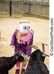 little child feeding animals