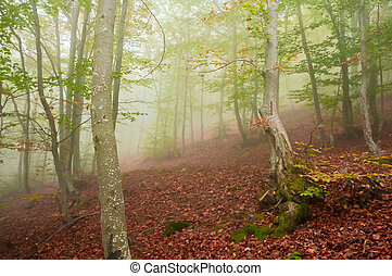 foggy forest in autumn