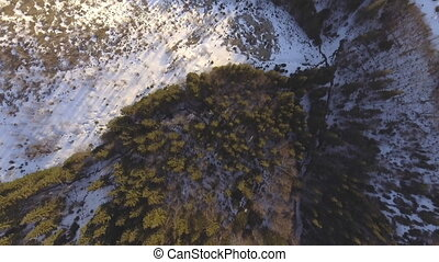 Dense coniferous forest top view aerial photography - a...
