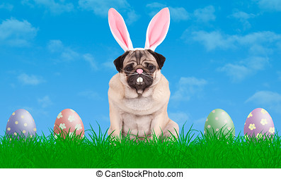 lovely pug puppy dog sitting in grass wearing bunny ears...