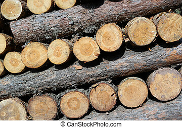 Pile of wood logs ready for industry