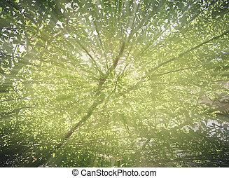blur leaf branch