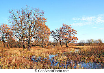 autumn oaks near small river