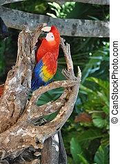 Parrot - Colorful Parrot