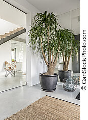 House with rank plants - Spacious house interior with rank...