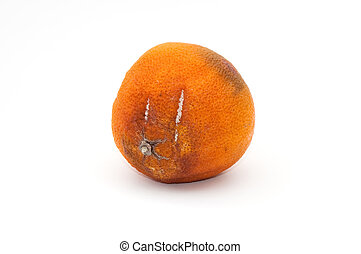 Rotten orange, image is taken over a white background.
