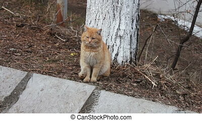 Big red homeless cat sitting on a gray winter street