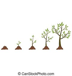 Tree life cycle - Stages of tree growth from small to large