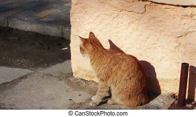 Big red homeless cat sitting on a gray winter street and...