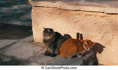 Two large stray cat sitting in the winter. One cat red...