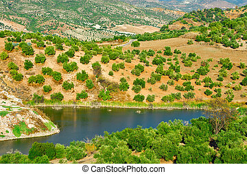 Sloping Hills of Spain with Olive Trees in the Autumn