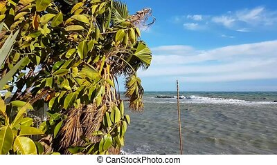 Palm Trees Blow in Strong Wind And Very High Stormy Waves -...