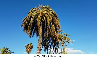 Strong Wind on Palm Trees - Palm Tree Moves In The Wind -...