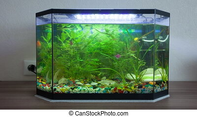 House aquarium with fishes. Timelapse - House aquarium with...