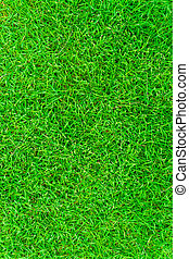 Green fresh grass background from above