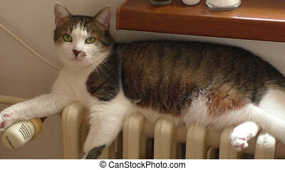 Cat sits on a heating radiator