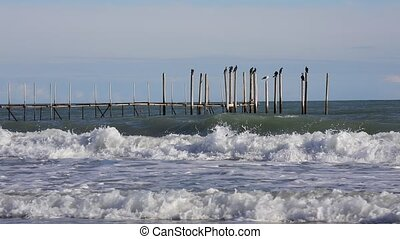 cormorants on the wooden pier and wave at sea