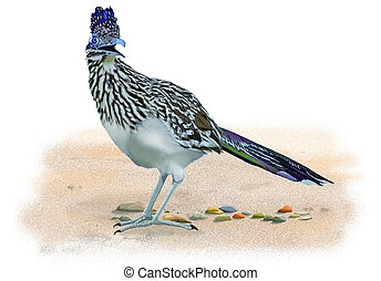Greater Roadrunner on desert sand - Greater Roadrunner -...