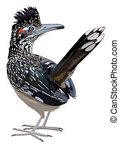Greater Roadrunner looking back - Greater Roadrunner -...