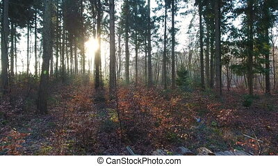 Aerial drone clip rising out of a forest at sunrise or...