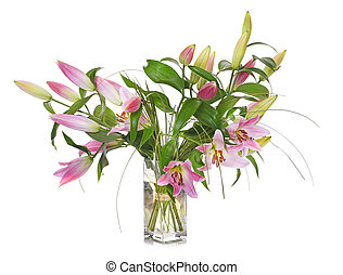 pink Lilium in studio - pink Lilium in front of white...