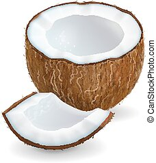 Coconut pieces isolated on white background. Realistic vector illustration