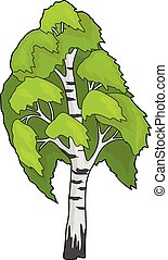 ? birch tree blowing in the wind - The birch tree in the...