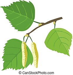 Birch tree leaves with earrings on a white background.