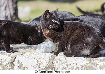 black cat eating togheter