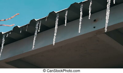 Melting icicles on a roof under the spring sun