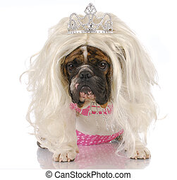 ugly princess - english bulldog dressed up like girl with...
