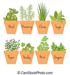 Set of vector culinary herbs in terracotta pots with labels....